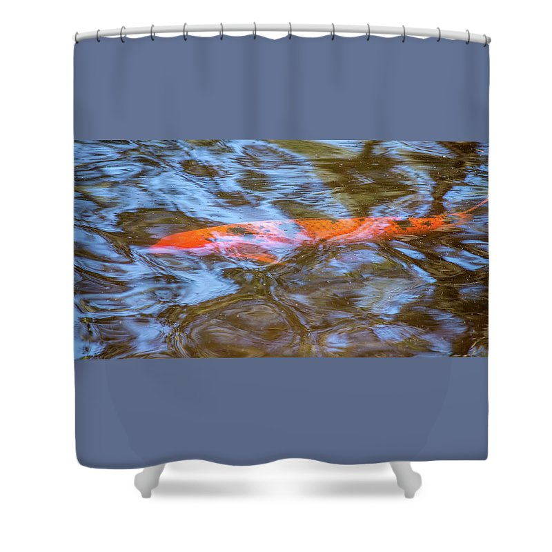Koi Shower Curtain featuring the photograph Koi Glimpses by Tania Read