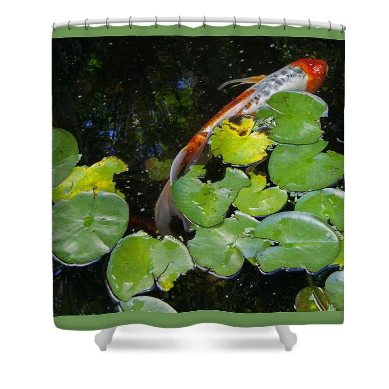 Koi With Lily Pads. Shower Curtain featuring the photograph Koi With Lily Pads A by Phyllis Spoor