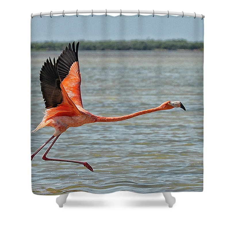 Flamingos Shower Curtain featuring the photograph La Huida by Salvador Penaloza