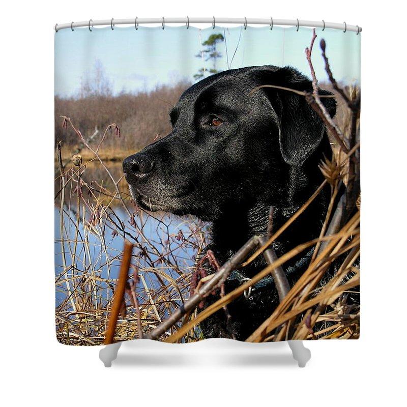 Dog Shower Curtain featuring the photograph Labrador Retriever Waiting In Blind by Natasha Sweetapple