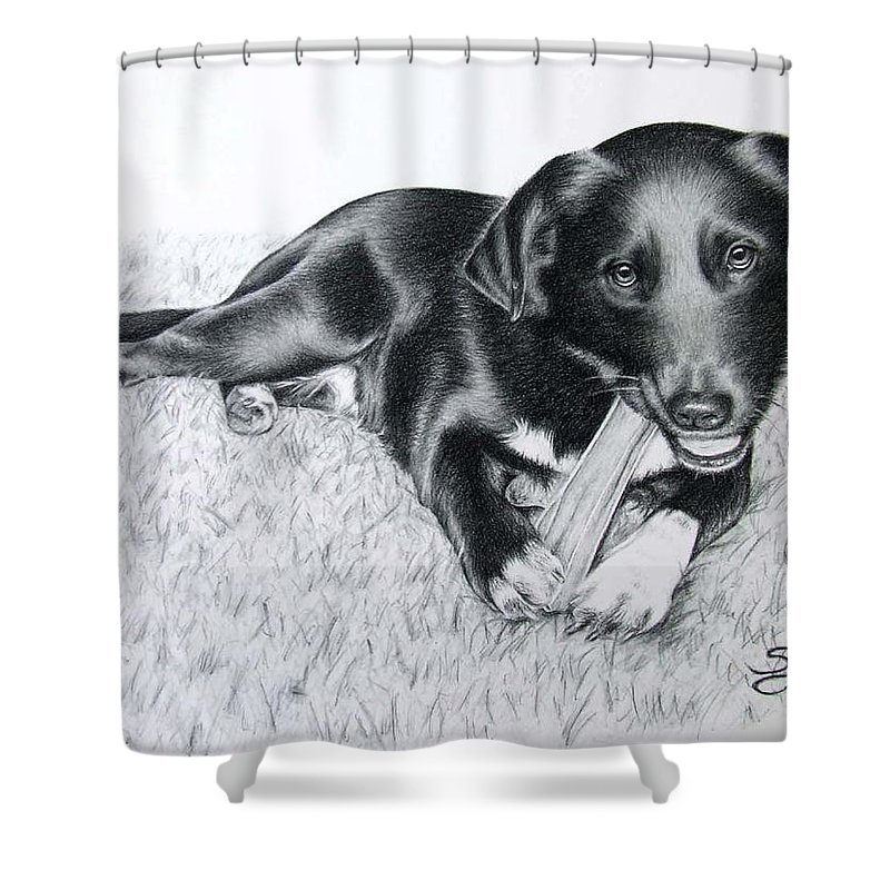 Dog Shower Curtain featuring the drawing Labrador Samy by Nicole Zeug