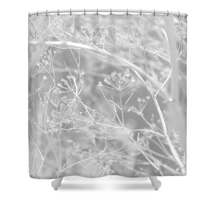 Queen Annes Lace Shower Curtain featuring the photograph Lace by Donna Blackhall