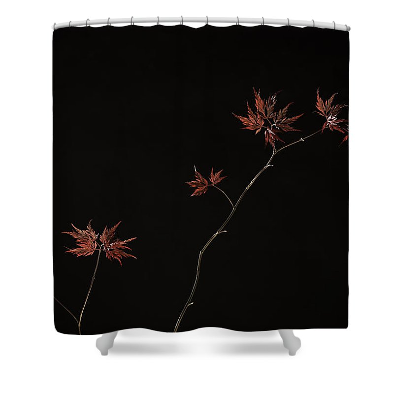 Japanese Shower Curtain featuring the photograph Lace Leaf Maple by Herman Robert