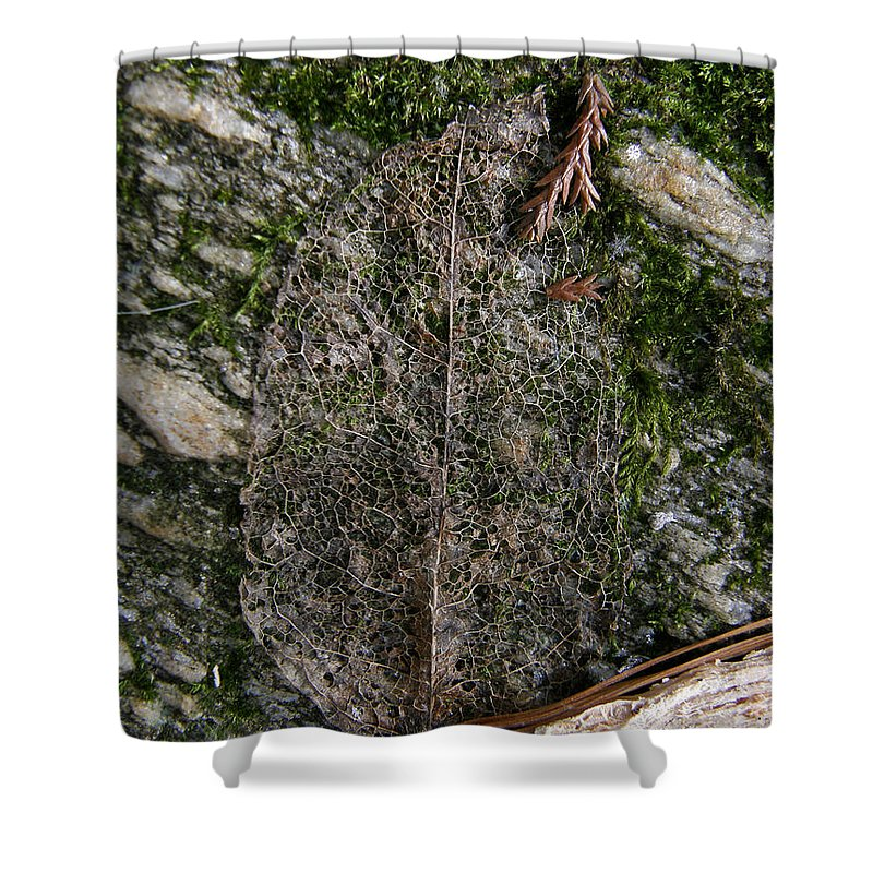 Leaf Shower Curtain featuring the photograph Lacey Leaf by Kimberly Mohlenhoff
