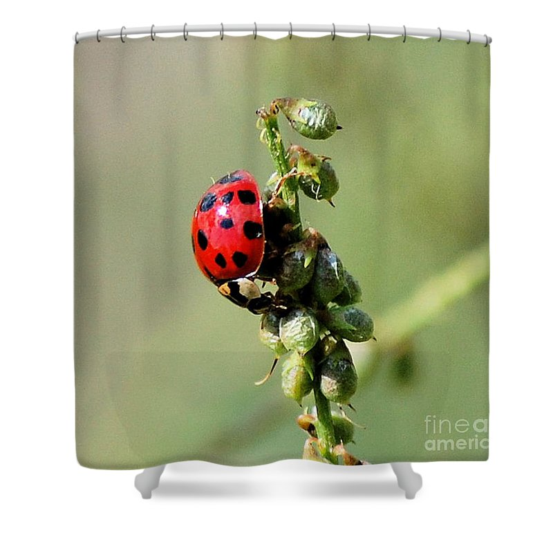 Landscape Shower Curtain featuring the photograph Lady Beetle by David Lane