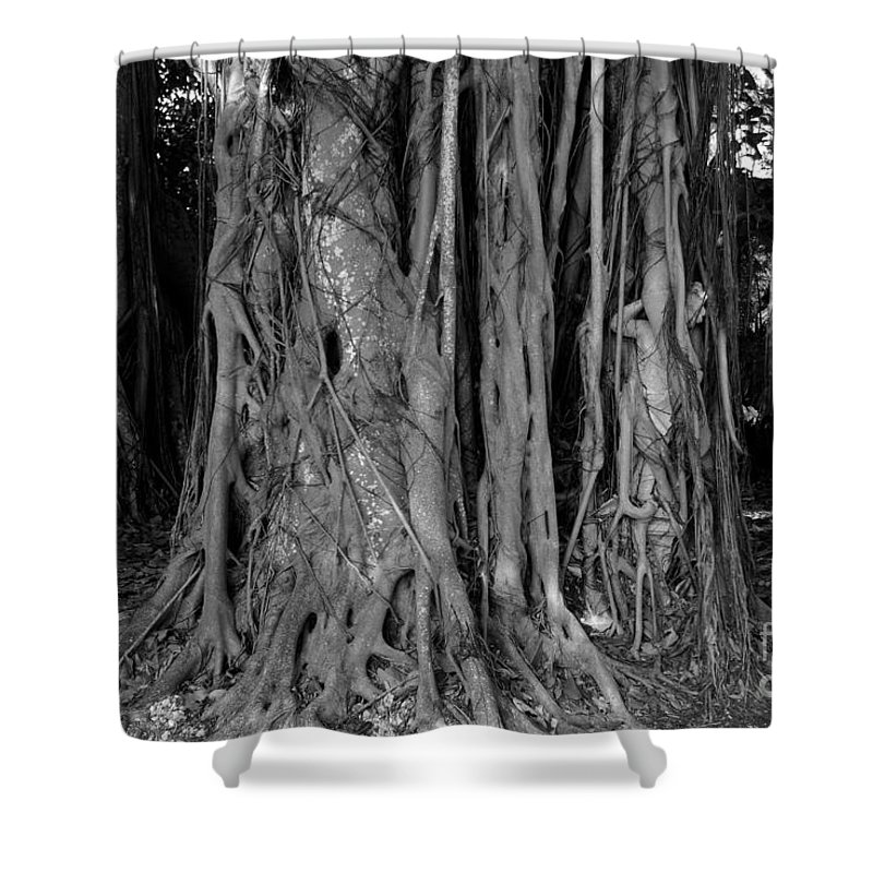 Banyan Trees Shower Curtain featuring the photograph Lady In The Banyans by David Lee Thompson