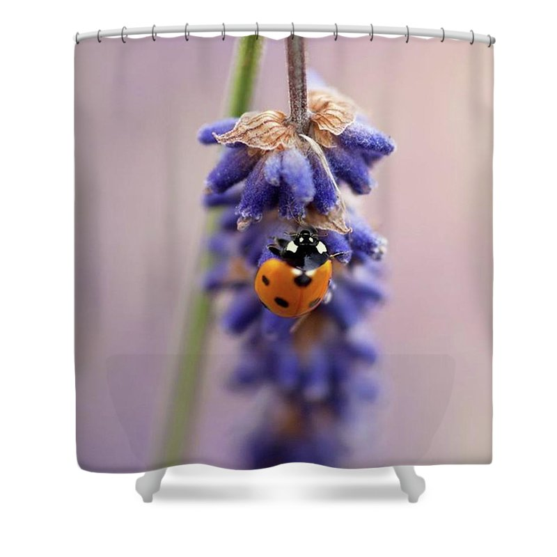 Insect Shower Curtains