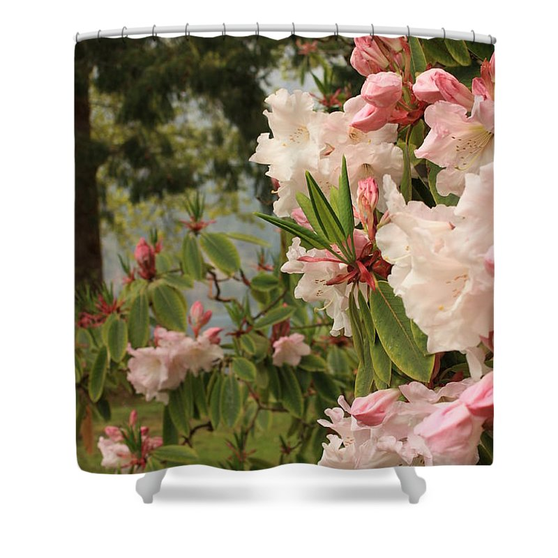 Lake Crescent Lodge Shower Curtain featuring the photograph Lake Crescent Lodge Rhododendrons by Carol Groenen