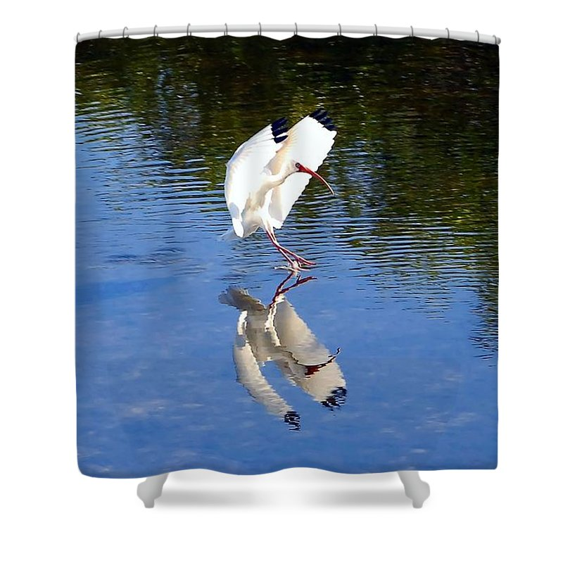Landing Shower Curtain featuring the photograph Landing by David Lee Thompson