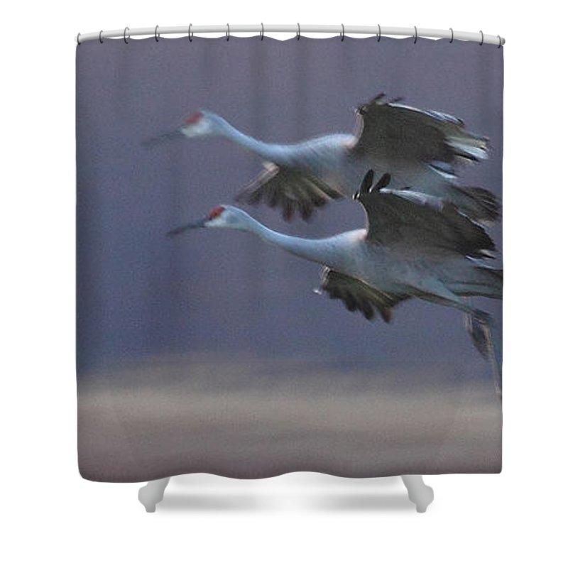 Sandhill Cranes Birds Photography Photograph Wildlife Flying Flight Shower Curtain featuring the photograph Landing Gear Down by Shari Jardina