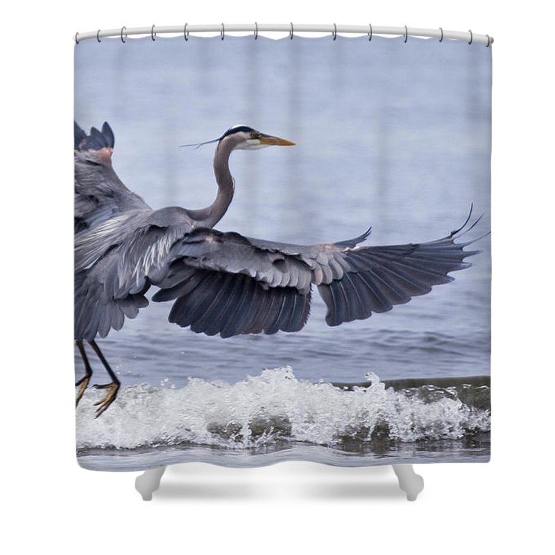 Bird Shower Curtain featuring the photograph Landing With The Wave by Karen Ulvestad