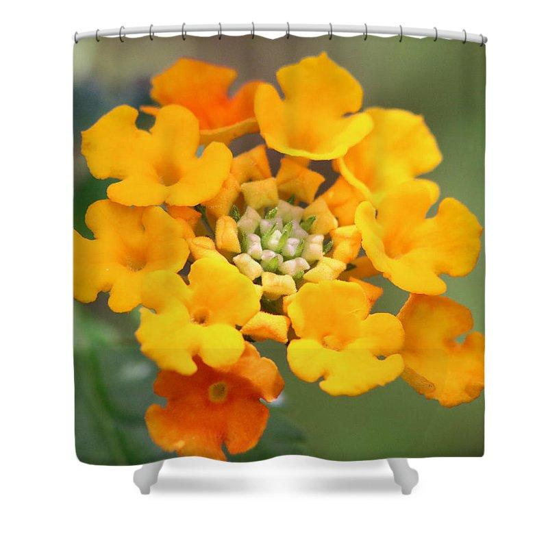 Lantana Flower Shower Curtain featuring the photograph Lantana Flower by Julie Rubacha