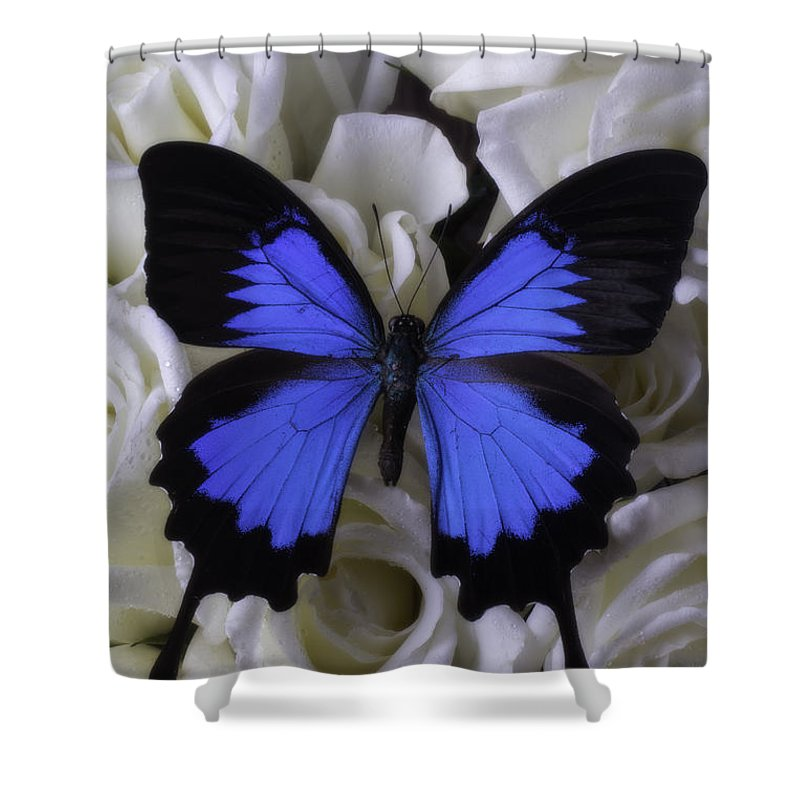 Blue Butterfly Shower Curtain Featuring The Photograph Large On White Roses By Garry Gay