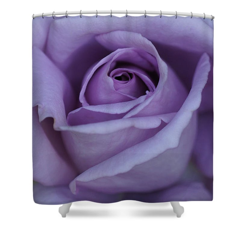 Center Shower Curtain featuring the photograph Large Purple Rose Center - 002 by Shirley Heyn