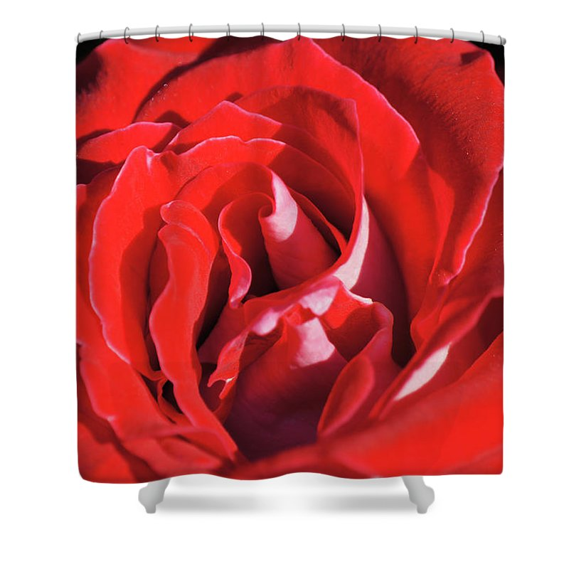 Center Shower Curtain featuring the photograph Large Red Rose Center - 003 by Shirley Heyn