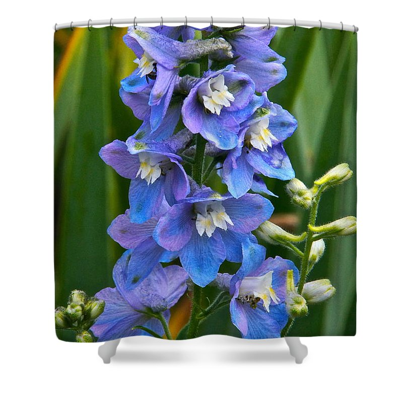 Larkspur Shower Curtain featuring the photograph Larkspur And Lady Friend by Byron Varvarigos