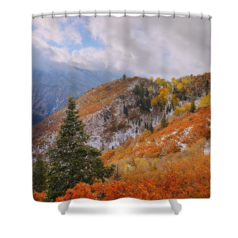 Forest Shower Curtain featuring the photograph Last Fall by Chad Dutson