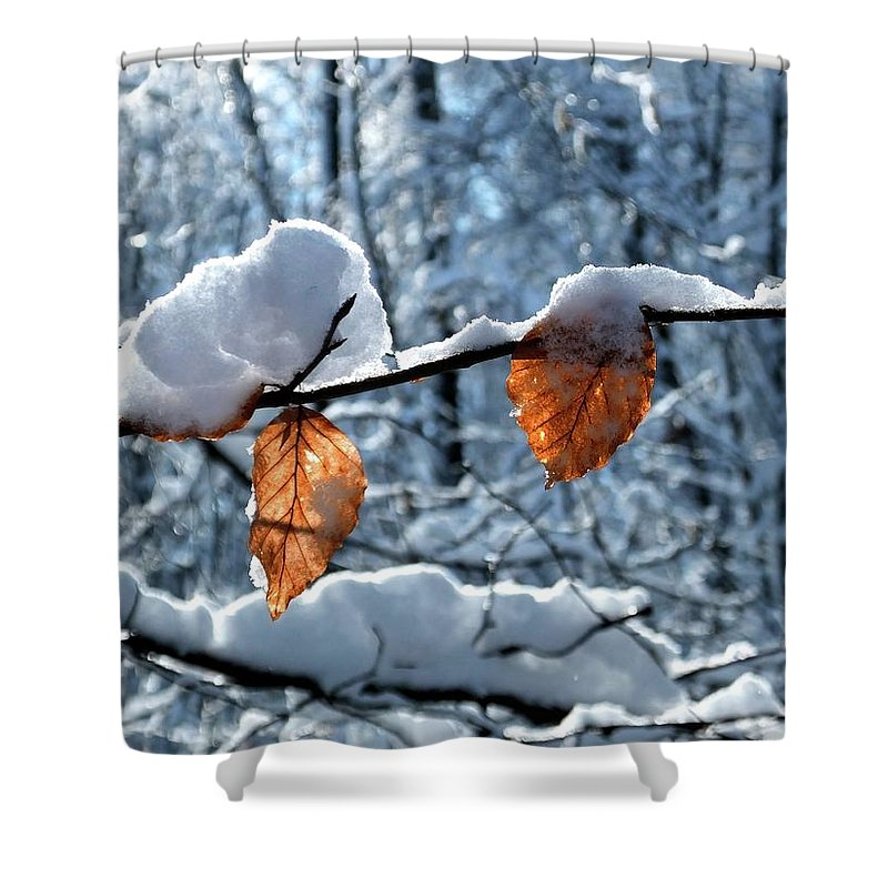 Color Shower Curtain featuring the photograph Last Leaves by Karen Stahlros