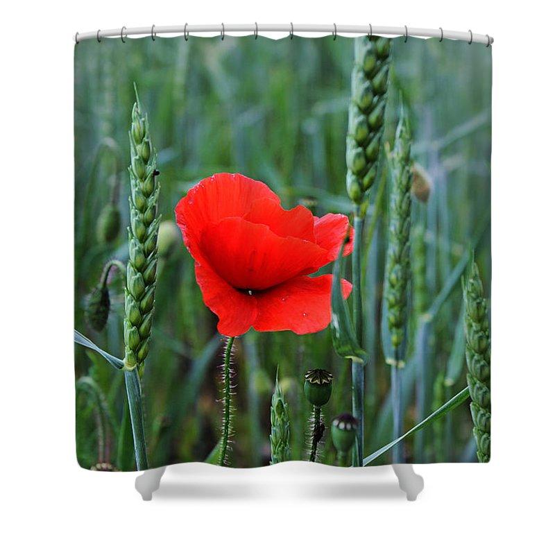 Poppy Shower Curtain featuring the photograph Last Poppy by Jutta Maria Pusl