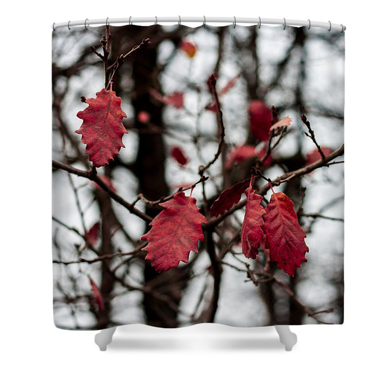 Vibrant Shower Curtain featuring the photograph Last red Leaves by Georgia Fowler