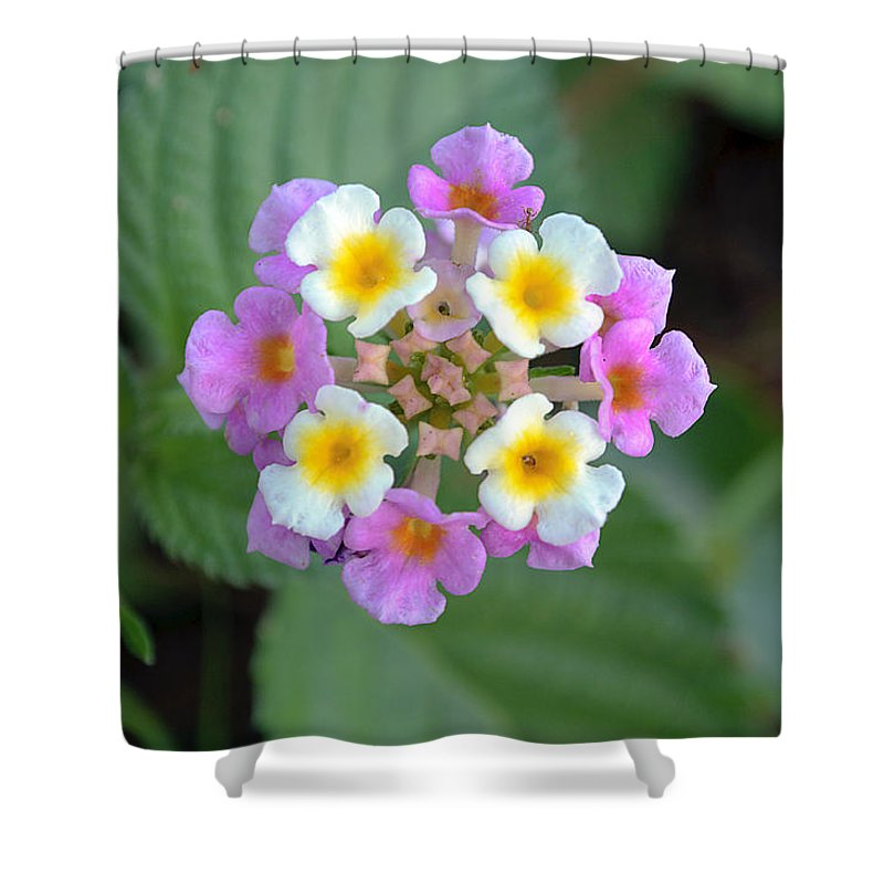 Latana Shower Curtain featuring the photograph Latana by Kenneth Albin