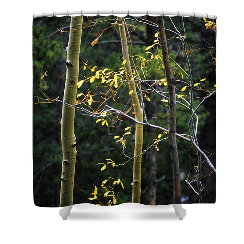 Aspen Shower Curtain featuring the photograph Late Aspen by Jerry McElroy
