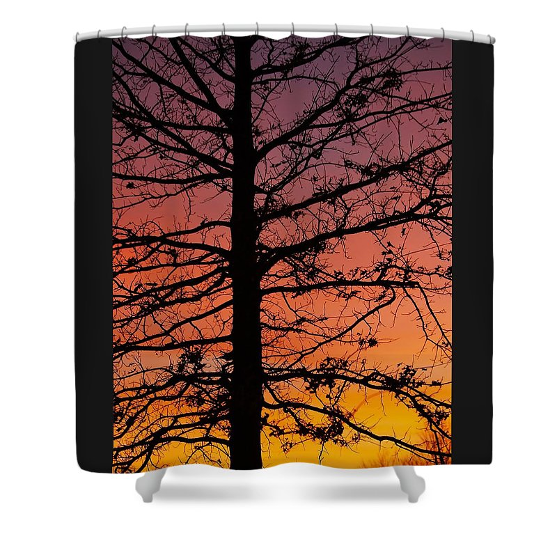 Tree Shower Curtain featuring the photograph Late Autumn Sunset by Denise Irving