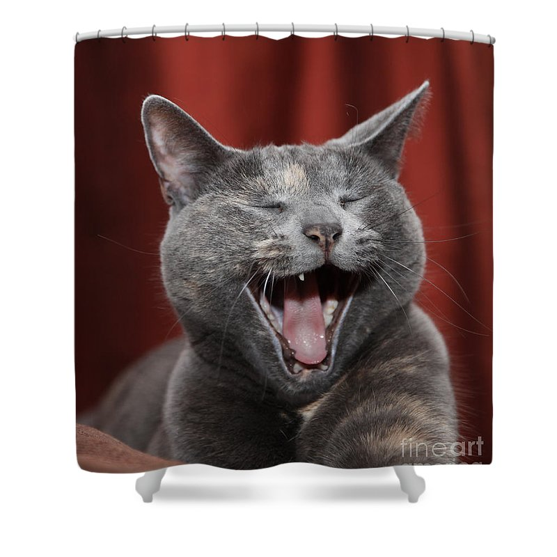 Kitty Shower Curtain featuring the photograph Laughing Kitty by Amanda Barcon