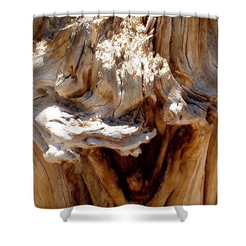 Tree Shower Curtain featuring the photograph Laughing Tree by Wayne Potrafka