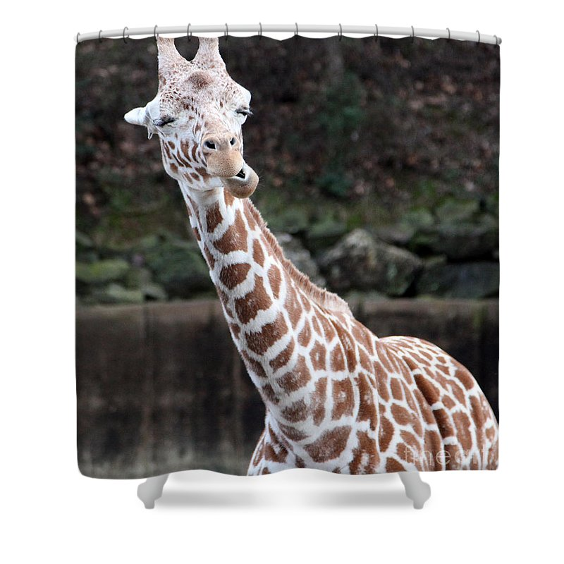 Laughing Giraffe Shower Curtain featuring the photograph Laughter by Amanda Barcon