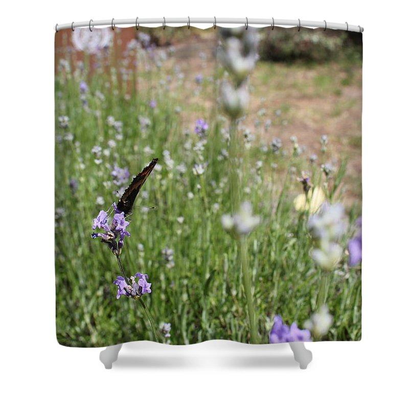 Flowers Butterflies Summer Shower Curtain featuring the photograph Lavender Butterflies by Michaela Hughes