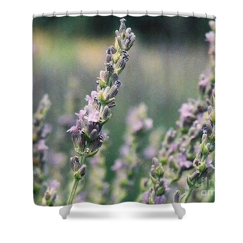 Flowers Shower Curtain featuring the painting Lavender by Eric Schiabor