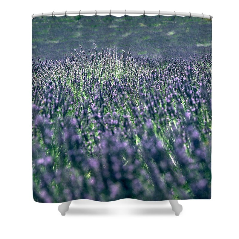 Lavender Shower Curtain featuring the photograph Lavender by Flavia Westerwelle