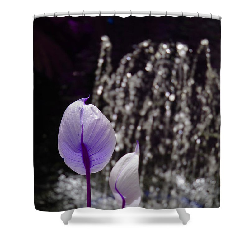 Lavender Shower Curtain featuring the photograph Lavender Flower At Fountain by Alice Markham