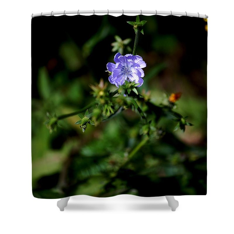 Digital Photograph Shower Curtain featuring the photograph Lavender Hue by David Lane