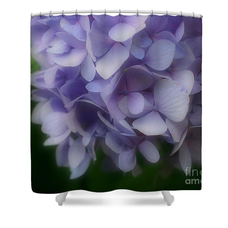 Flower Shower Curtain featuring the photograph Lavender Hydrangea by Smilin Eyes Treasures