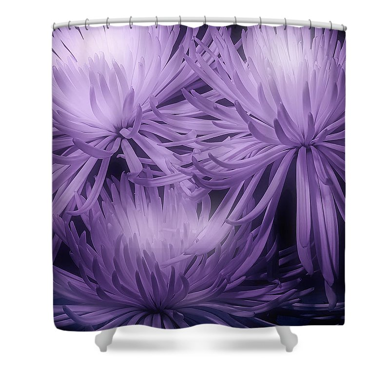 Mums Shower Curtain featuring the photograph Lavender Mums by Tom Mc Nemar