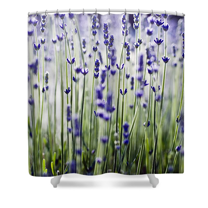 Abstract Shower Curtain featuring the photograph Lavender Patterns by Ray Laskowitz - Printscapes