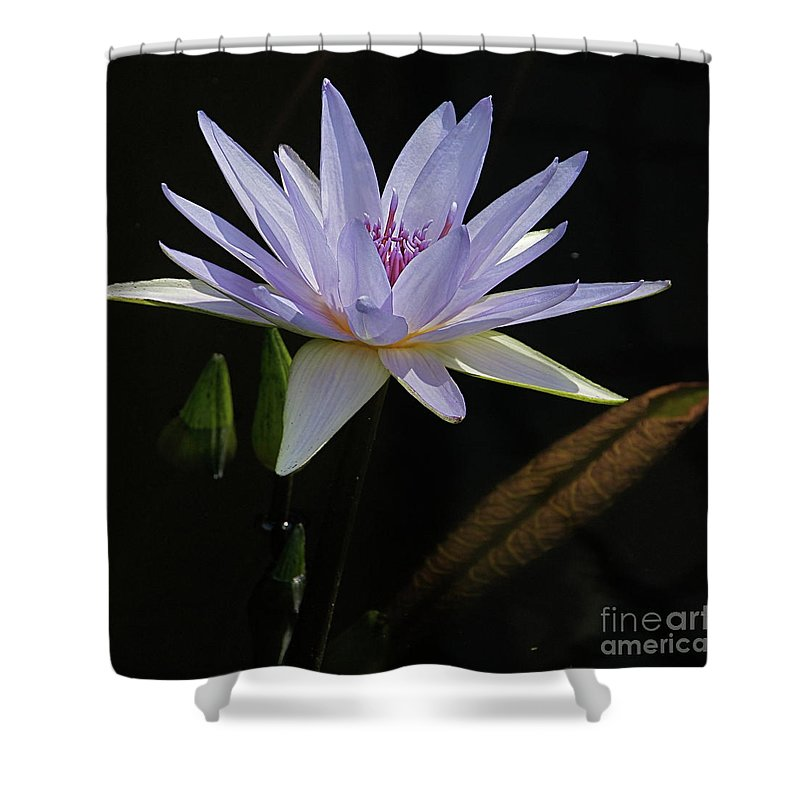 Lavender Shower Curtain featuring the photograph Lavender Tropical Water Lily by Byron Varvarigos