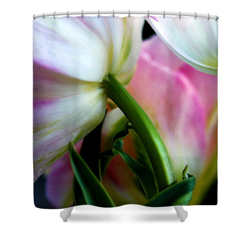 Flower Shower Curtain featuring the photograph Layers Of Tulips by Marilyn Hunt