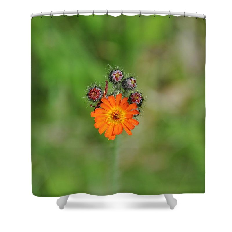 Flower Shower Curtain featuring the photograph Leading The Way by Rich Bodane