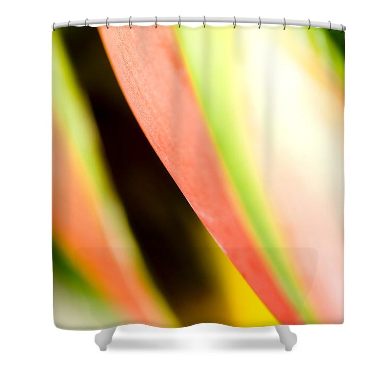 Abstract Shower Curtain featuring the photograph Leaf Abstract by Ray Laskowitz - Printscapes