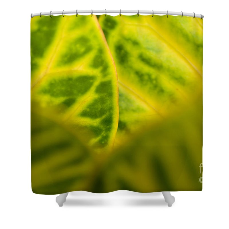 83-pfs0192 Shower Curtain featuring the photograph Leaf Abstract by Ray Laskowitz - Printscapes