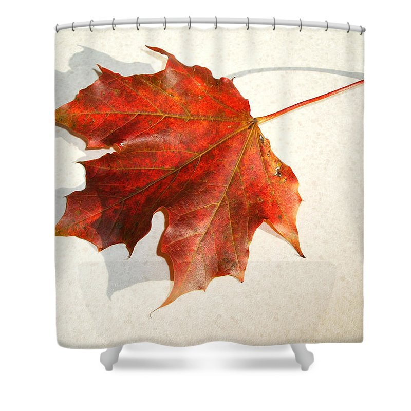 Leaf Shower Curtain featuring the photograph Leaf by Cliff Norton