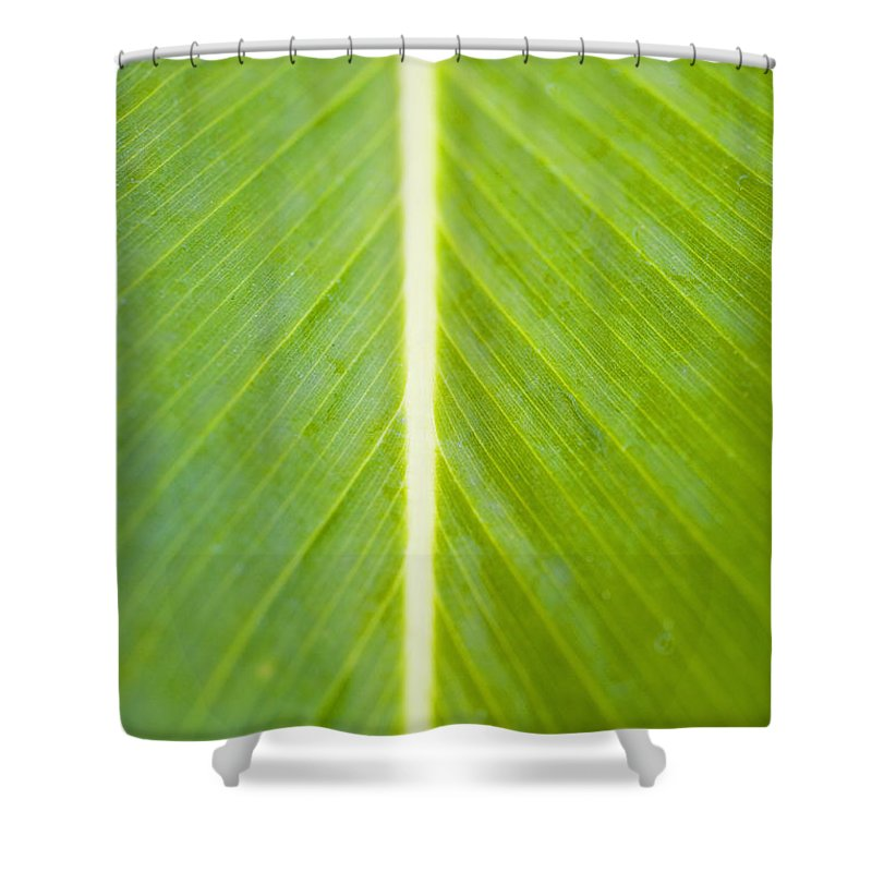 Botanical Shower Curtain featuring the photograph Leaf Close-up by Tomas del Amo - Printscapes