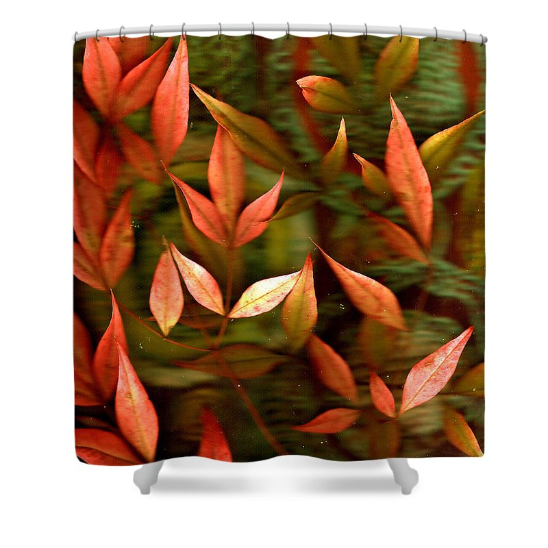 Leaves Shower Curtain featuring the photograph Leaf Collage Photo by Wayne Potrafka