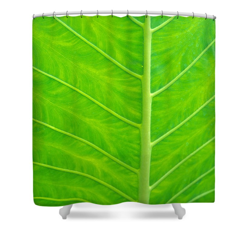 Afternoon Shower Curtain featuring the photograph Leaf Detail by Kyle Rothenborg - Printscapes