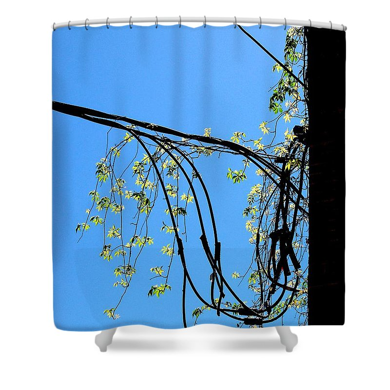 Lines Shower Curtain featuring the photograph Leaf Lines by Katie Beougher