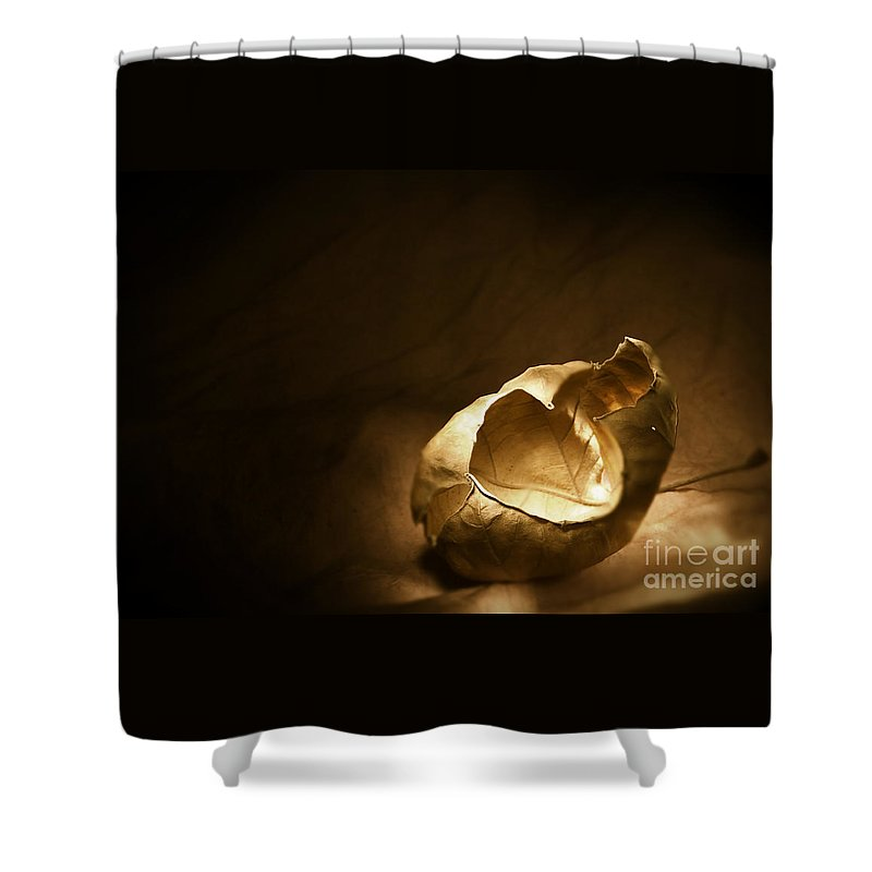 Leaf Shower Curtain featuring the photograph Leaf Series 1 by Timothy Bischoff