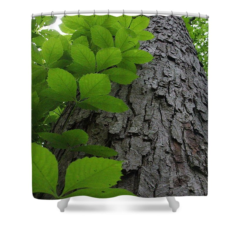Leafy Ladder Shower Curtain featuring the photograph Leafy Ladder by Ed Smith